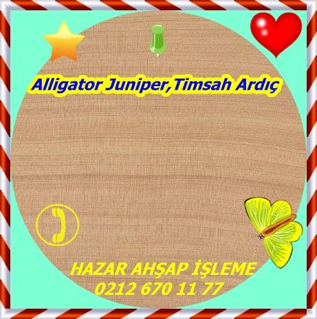 alligator-juniper