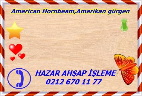 american-hornbeam