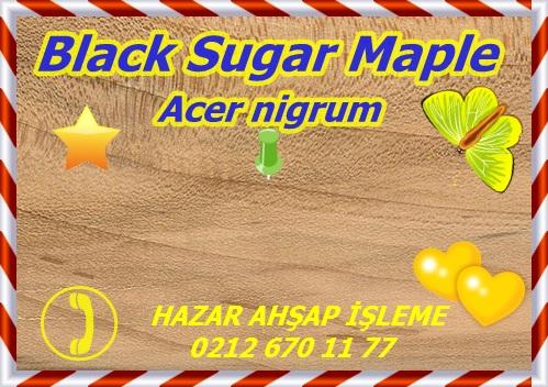 black-maple