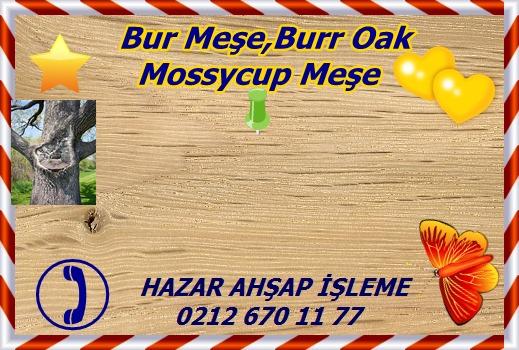 bur-oak