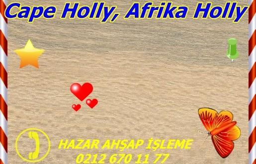 Cape Holly, Afrika Holly,llex mitis