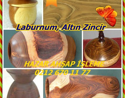 Laburnum, Altın Zincir,Laburnum anagyroides,Sarısalkım