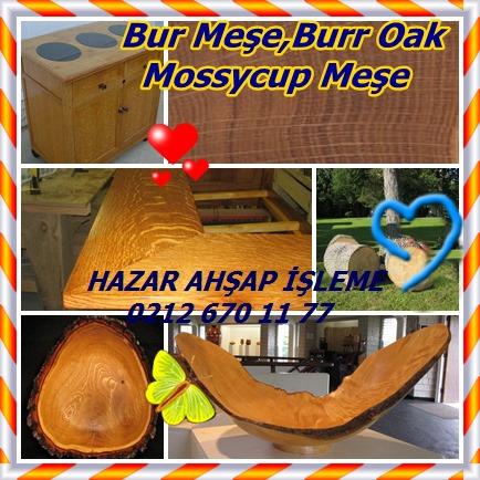 catsBur Oak, Burr Oak, Mossycup Oakğğ