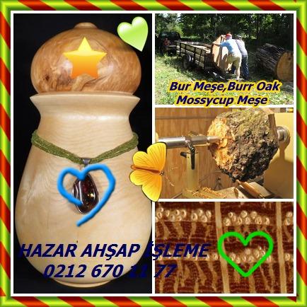 catsBur hpOak, Burr Oak, Mossycup Oak