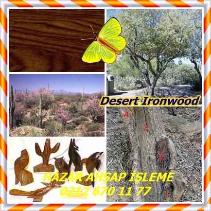 catsDesert Ironwood
