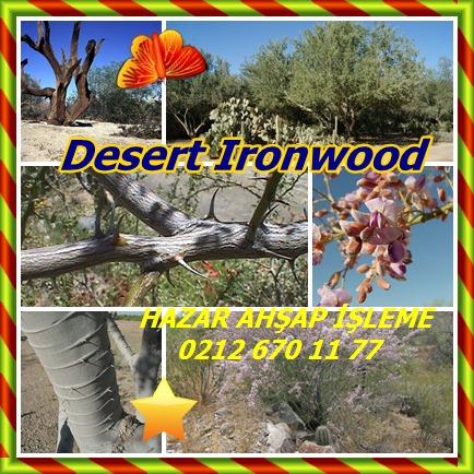 catsDesert Ironwood2