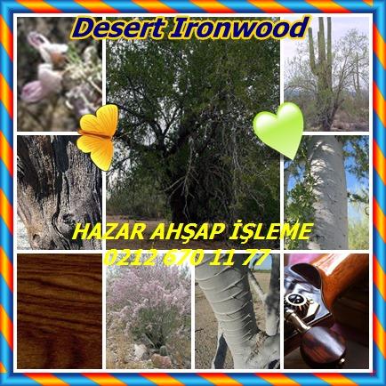 catsDesert Ironwood5