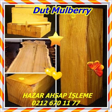 catsDut Mulberry22