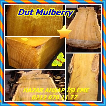catsDut Mulberry33