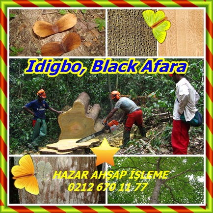catsIdigbo, Black Afara