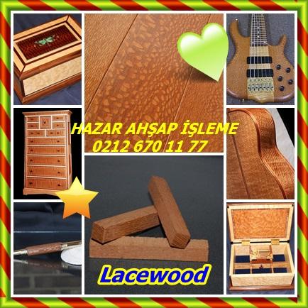 catsLacewood1112