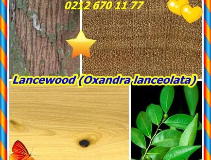 Lancewood,Batı Hint Lancewood,(Oxandra lanceolata),(syn uvaria lanceolata.)