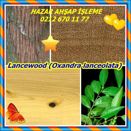 catsLancewood (Oxandra lanceolata)