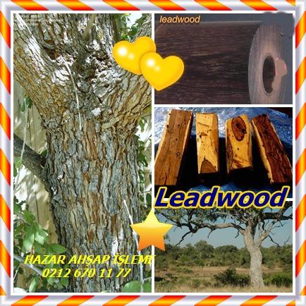 catsLeadwood3