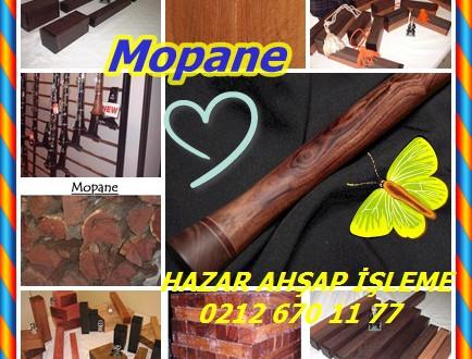 Mopane,Mopani,Colophospermum mopane