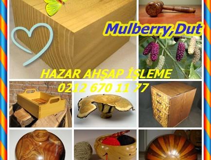 Mulberry,Dut , Morus spp. ,(Morus alba,M. nigra, M. rubra)