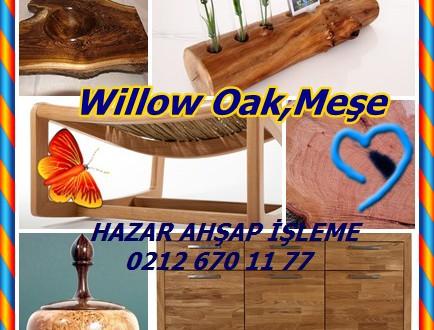 Willow Meşe,Quercus Phellos