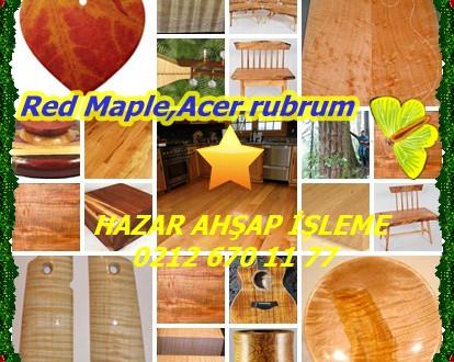 Red Maple,Acer rubrum,Kırmızı Akçaağaç