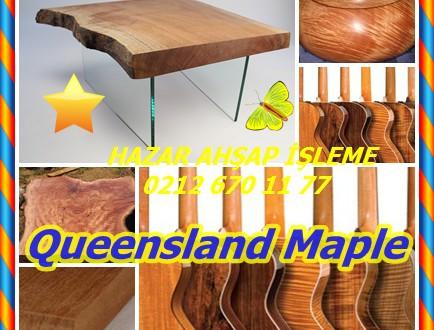 Queensland Maple, Flindersia spp. (F brayleyana)