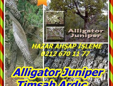 Alligator Juniper,Timsah Ardıç , Juniperus deppeana