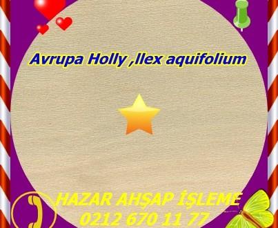 İngilizce Holly, Avrupa Holly ,llex aquifolium