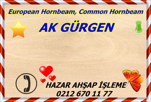 european-hornbeam