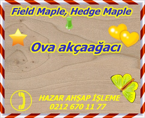 field-maple-s