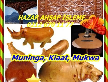 Muninga,Kiaat,Mukwa,(Pterocarpus angolensis)