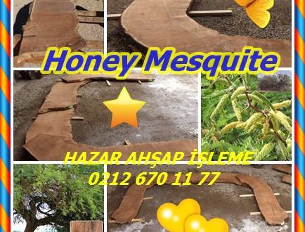 Honey Mesquite,Bal Mesquite (Prosopis glandulosa)