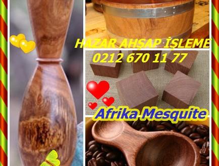 Afrika Mesquite,Prosopis africana,(Prosopis nigra)