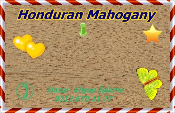 honduran-mahogany1