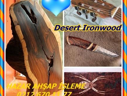 Desert Ironwood,(Olneya tesota),Arizona Ironwood, Palo-de-Hierro, Palo-de-