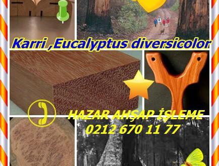 Karri ,Eucalyptus diversicolor