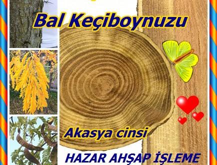 Honey Locustey,Bal Locust,Bal keçiboynuzu,(Gleditsia triacanthos)