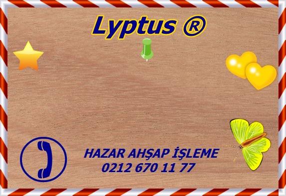 lyptus