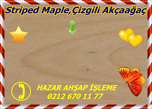 maple, misc striped 3a s50 plh