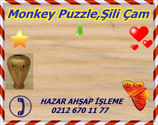 monkey-puzzle