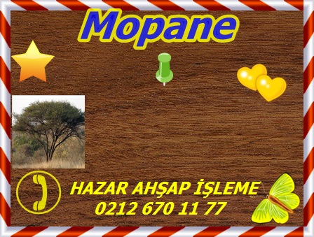 mopane-copy