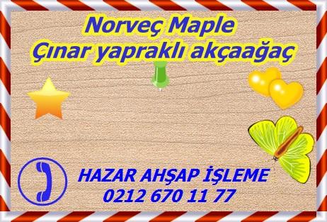 norway-maple