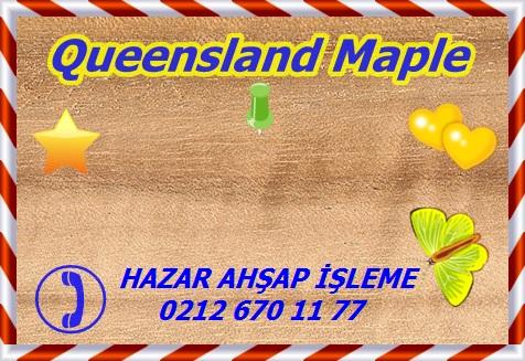queensland-maple