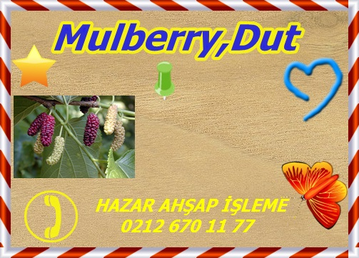 red-mulberry-gw