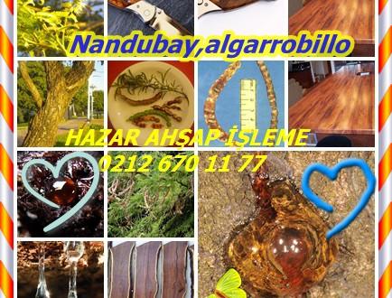 Nandubay,algarrobillo,Prosopis affinis,(Schinopsis spp.),Espinillo, Ibopé-Morotí
