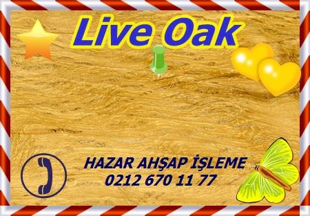 Quercus virginiana, Live Oak, Mississippi