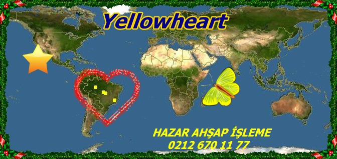 Yellowheart,14