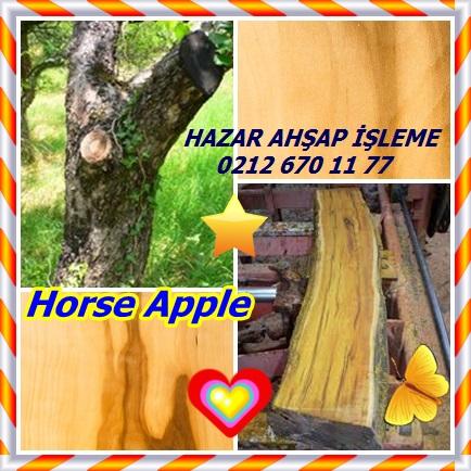catsHorse Apple