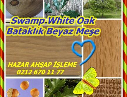 Swamp White Oak,Bataklık Beyaz Meşe,Quercus bicolor