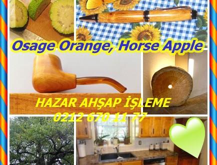 Osage Orange, (Maclura pomifera),Horse Apple, Elma At,Hedge Apple, Bois d'arc,