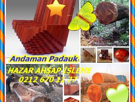 Andaman Padauk,Andaman padauk, Andaman sekoya, Doğu Hint maun, Hint sekoya, Padauk,Pterocarpus dalbergioides