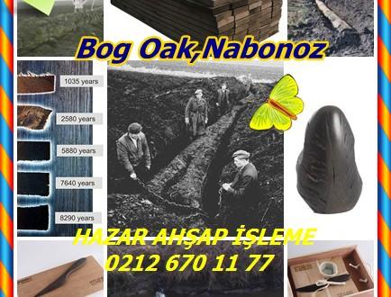 Bog Oak, Nabonoz Meşe,İrlandalı bataklık meşe,morta