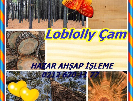 Loblolly çamı, Güney Çam,	Pinus taeda,oldfield çam, North Carolina çam, Arkansas çam, çam shortleaf.